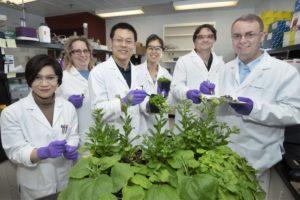 Muitos dos pesquisadores de polímeros biodegradáveis são profissionais da Engenharia de Materiais